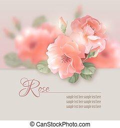 karte, mit, vektor, blumen, rosen