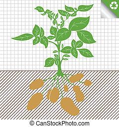 kartoffel, plante, busk, vektor, begreb