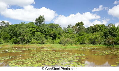 Karura Forest Lake, Nairobi, Kenya - The beautiful Lily Lake...