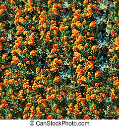 kasownik, kwiaty