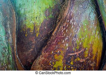 kasownik modelują, drzewo, krzywa, struktura, tło