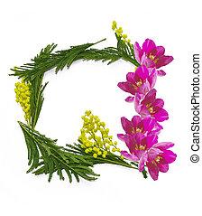 kasownik, tulipany, mimoza, tło, skoczcie kwiecie