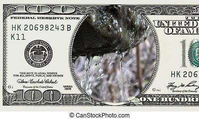 kasownik, wiosna, krople, wpaść, 100 halabardy dolara