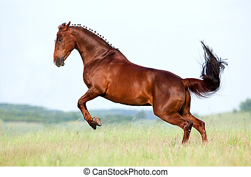 kastanie, feld, pferd, läufe, galopp