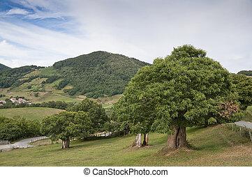 kastanie, landschaft, bäume, navarra