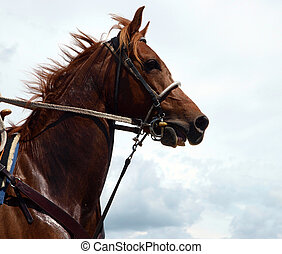 kastanie, pferd, cowboys