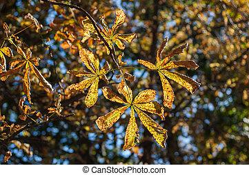 kastanje, bladeren, gele