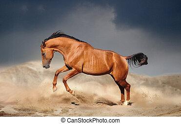 kastanje, gouden, paarde, don, looppas, kosteloos, woestijn