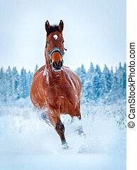 kastanje, paarde, uitvoeren, winter, galop
