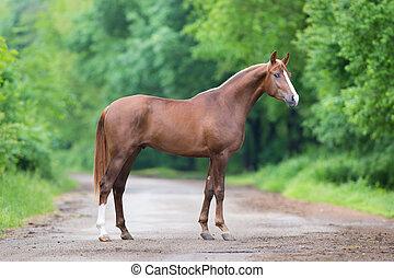 kastanje, stående, Häst, väg