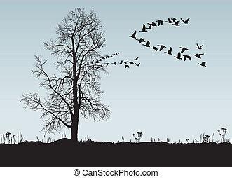 kastanje, wild, geese