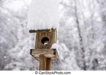kasten, hölzern, schnee, hoch, angehäuft, vogel