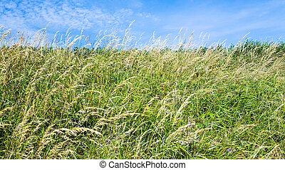 kaszáló, fű, sapka, feláll, mező, gris-nez, becsuk
