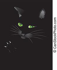 kat, black , gezicht