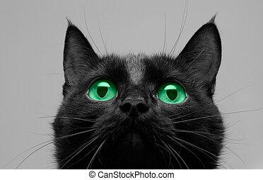 kat, black , op, blik