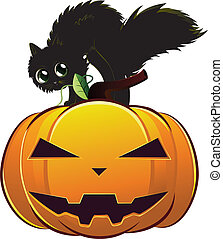 kat, black , pompoen