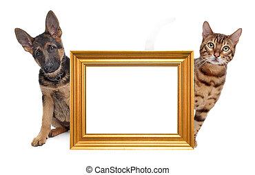 kat, en, dog, bovenkant, om te, bovenkant
