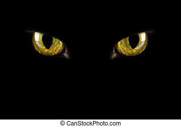 kat, eyes, gloeiend, in, de, dark., halloween, achtergrond