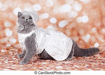 kat, gemaskerd