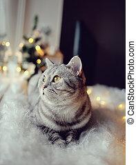 kat, in, de, winter, venster