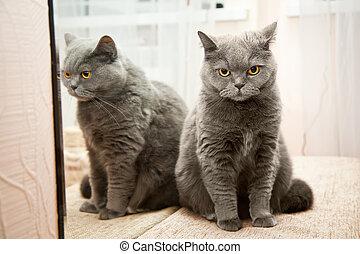 kat, in, een, spiegel