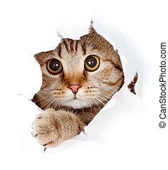 kat, kijkend, in, papier, bovenkant, gescheurd, gat,...