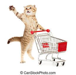 kat, met, boodschappenwagentje, vrijstaand, op wit