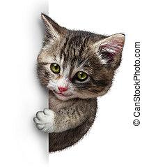 kat, met, leeg, kaart