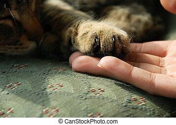 kat, poot, menselijke hand