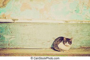 kat, retro, het kijken