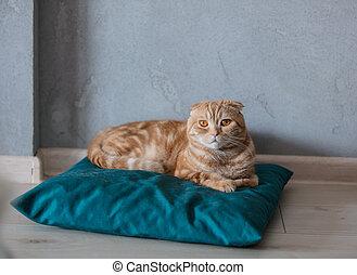 kat, sittin, hoofdkussen, gember, vloer