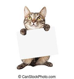 kat, verdragend, meldingsbord, leeg