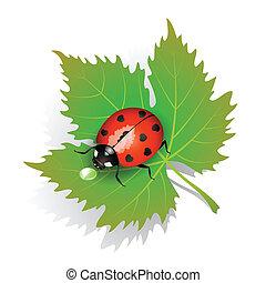 katicabogár, levél növényen