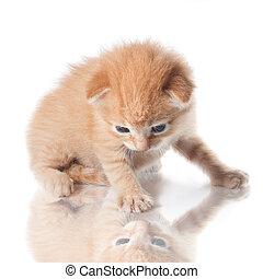 katje, kijkend, zijn, reflectie, vrijstaand, op wit