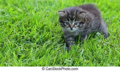 katje, weinig; niet zo(veel), gras