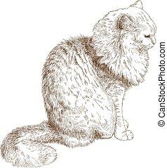 katt, gravyr, illustration