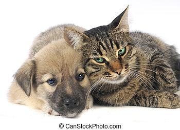 katt, och, hund