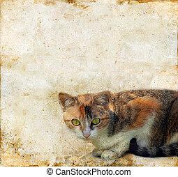 katt, på, a, grunge, bakgrund