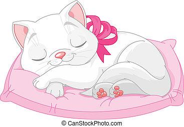 katt, söt, vit