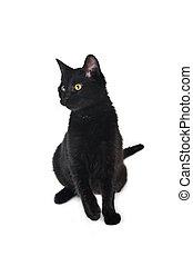katt, svart