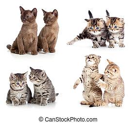 katte, eller, kittens, par, sæt, isoleret