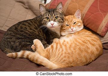 katter, vänskap, två