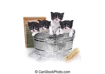 kattungar, ta ett bad, in, a, tvättbalja, med, borsta, och, bubblar