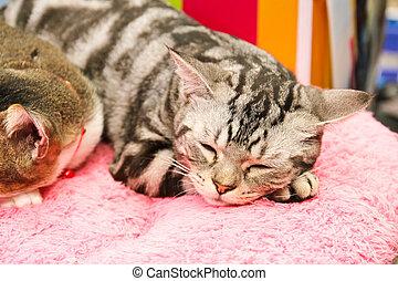 kattunge, är, vila