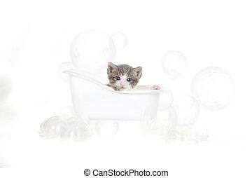 kattunge, stående, in, studio, ta ett bad