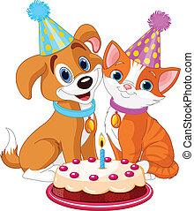 katz, hund, feiern