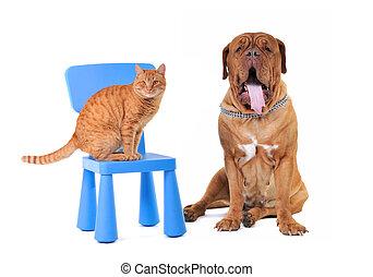 katz, und, groß, hund