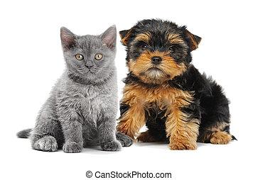 katz, und, hund