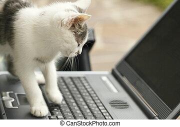 katz, und, laptop