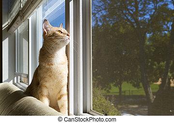 Katze, katzenkinder, Morgen